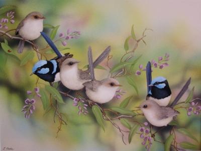 blue wrens & sasparilla 2011 (400x300)