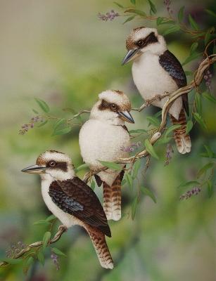 3 Kookaburras 2011 (307x400)