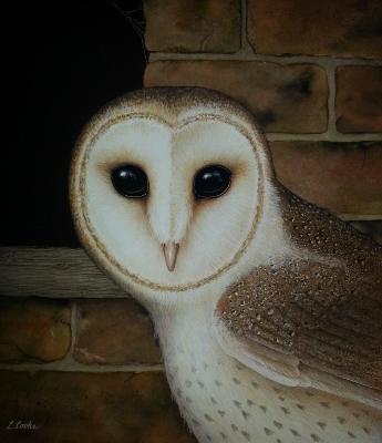 Barn Owl (345x400)
