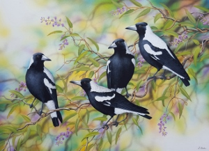 Magpies 2016 (300x217)