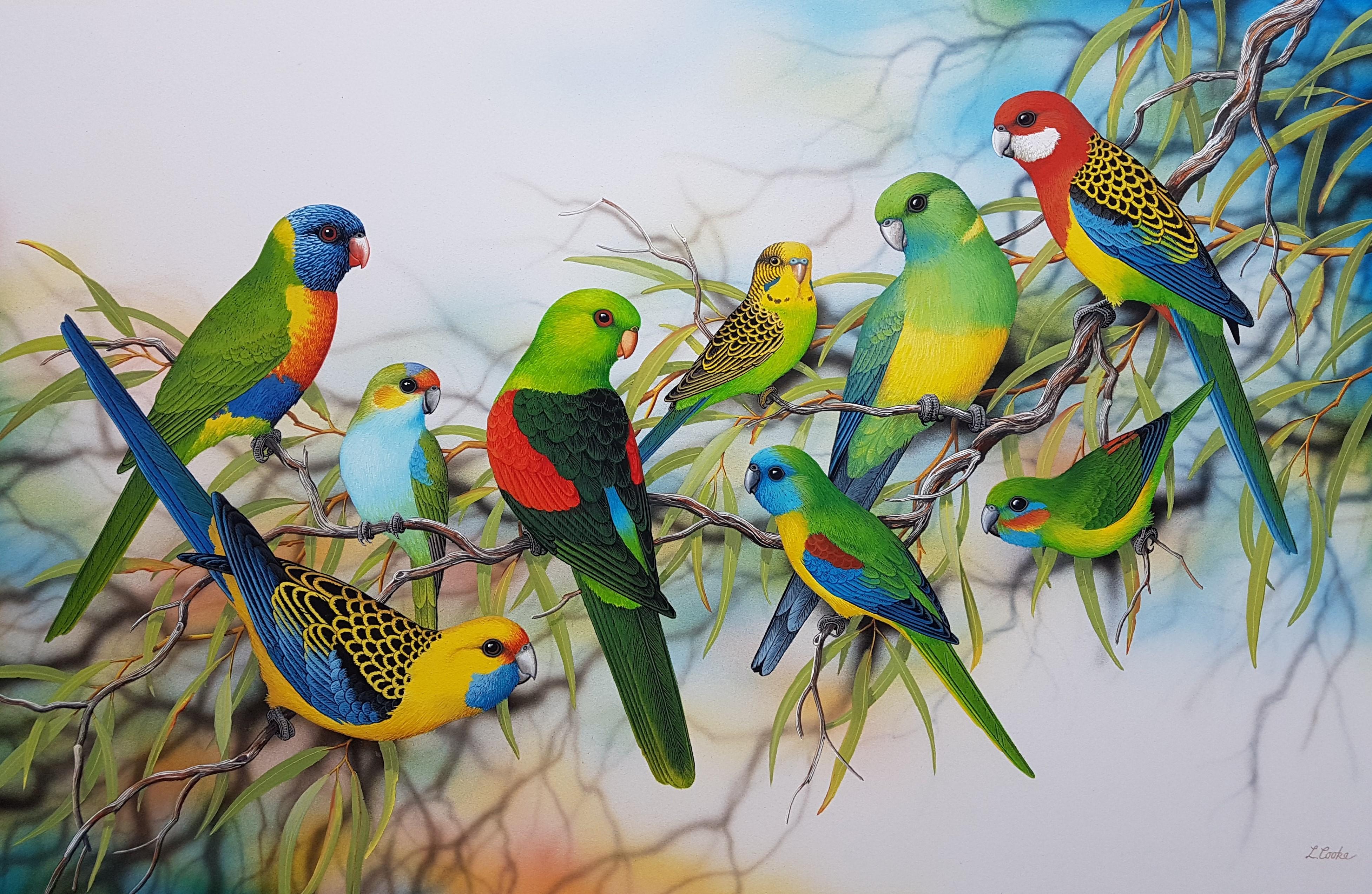 Aust. Parrots